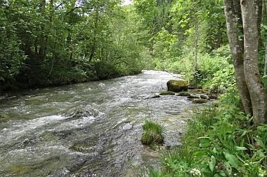 Pongauer Taurach